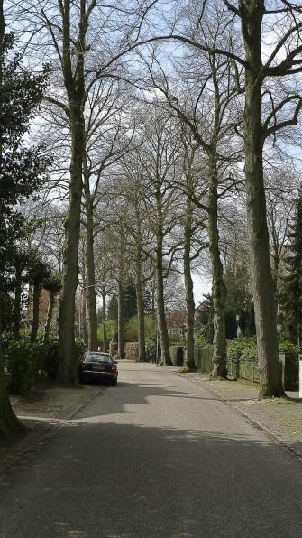 Copaci frumosi, strada linistita in Hilversum